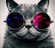 Epic cat wallpaper 10117383
