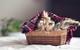 Cat in basket photo