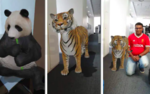 How to get Google 3D AR animals to appear in your phone camera to your living Space