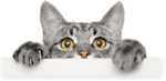 Free Whiskas Sample - Give your Cat the Protein Power!